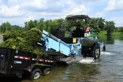Mannen lastar av ogräs för sjöogrässkördearbetare Arkivbild