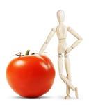 Mannen lutar på en enorm mogen tomat Arkivbilder