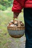 Mannen med en korg av encentmyntbullen plocka svamp Royaltyfria Foton