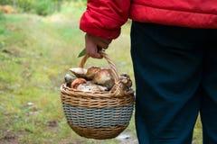 Mannen med korgen av porcinoen plocka svamp i hand Royaltyfri Fotografi