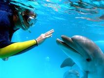 Mannen meddelar med en delfin arkivbild
