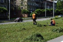 Mannen mejar gräset fotografering för bildbyråer