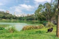 Mannen och hunden som tycker om Aclimacaoen, parkerar i Sao Paulo Royaltyfria Bilder