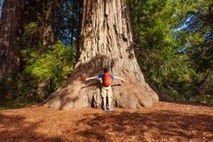 Mannen omfamnar det stora trädet i redwoodträdet Kalifornien, USA Royaltyfri Fotografi