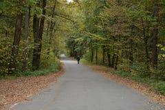 Mannen promenerar vägen i skogen Arkivbild