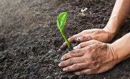Mannen räcker att plantera det unga trädet, medan arbeta i trädgården royaltyfria bilder