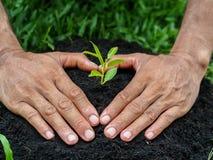 Mannen räcker att plantera trädet in i jorden plantera för begrepp royaltyfri bild