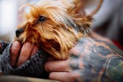 Mannen räcker den hållande hunden royaltyfria foton