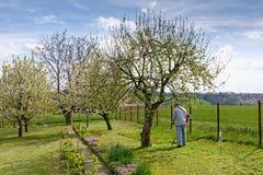 Mannen reglerar på vårgräsmattan i hans trädgård Royaltyfria Bilder