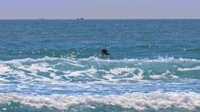 Mannen seglar på surfingbrädan förbi körning av vattensparkcykeln stock video