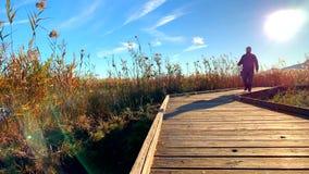 Mannen som går över en träbana, i de naturliga våtmarkerna, parkerar La Marjal i Pego och Oliva arkivfilmer