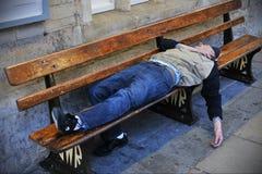 Mannen sover på en bänk Arkivbild