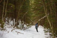 Mannen vandrar i vinterskog arkivfoto