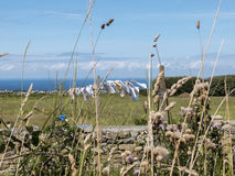 Mannequin au soleil et le vent au sol herbeux du Images libres de droits