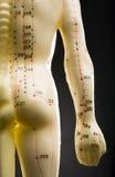Mannequin da acupunctura -- parte traseira e braço fotografia de stock royalty free