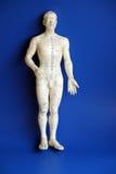 Mannequin de Accupressure foto de stock royalty free
