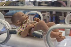 Mannequin infant in an incubator royalty free stock images