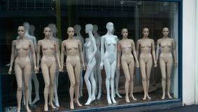 Mannequin. Lots of mannequin stock photos
