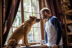 Mannetje en staffordshire terriër die elkaar bekijken royalty-vrije stock fotografie