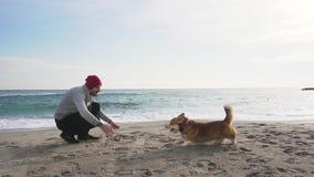 Mannetje met corgihond stock video