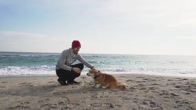 Mannetje met corgihond stock videobeelden