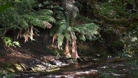 Mannfarne durch Franklin-Flusssteuerbares in Tasmanien stock video footage
