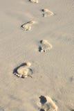 Mannfußdruck auf einem weißen Sandstrand Lizenzfreies Stockbild