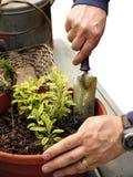 Manngartenarbeit Stockfoto