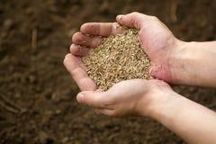 Mannholding Handin den organischen Betriebssamen auf einem Frühlingsbodenhintergrund stockbild