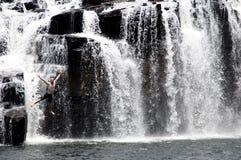 Manning Falls - Kimberley - Australie Photos stock