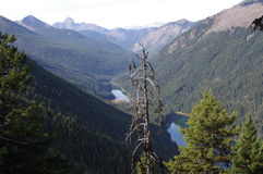 Manning Provincial Park Royalty Free Stock Photo