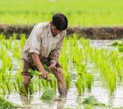 Mannlandwirt Stockfoto