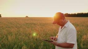 Mannlandwirt von mittlerem Alter, der an dem Feld arbeitet Es benutzt eine digitale Tablette Abend bei Sonnenuntergang stock footage