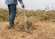 Mannrührstange, die trockenes Gras schaufelt Stockfotos