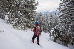 Mannreisender in den Schneeschuhen entspannen sich unter Schnee bedeckten Tannenbäumen Stockfoto