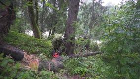 Mannschnitt-Baumkettensäge stock footage