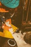 Mano-alimentación del cordero Fotos de archivo libres de regalías