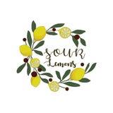 Mano amarga de los limones dibujada Limones amarillos jugosos Imagenes de archivo