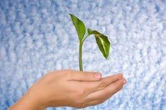 Mano & pianta Fotografia Stock