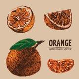 Mano anaranjada del color detallado del vector de Digitaces dibujada ilustración del vector