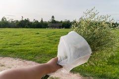 Mano asiática de los hombres que sostiene las flores blancas Fotos de archivo