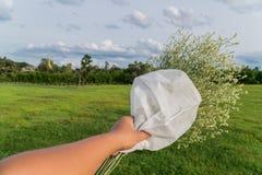 Mano asiática de los hombres que sostiene las flores blancas Imágenes de archivo libres de regalías