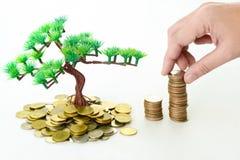 Mano che dispone moneta sull'albero di soldi Immagine Stock