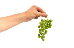 Mano che giudica un'uva verde isolata Fotografie Stock Libere da Diritti