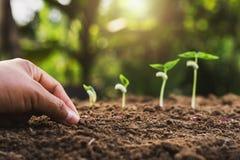 mano che pianta punto crescente di semina in giardino immagine stock