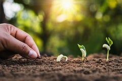 mano che pianta punto crescente di semina in giardino immagine stock libera da diritti