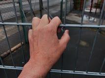 Mano che tiene le sbarre di ferro Recinto del confine o concetto della prigione fotografia stock libera da diritti