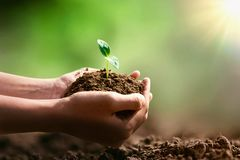 mano che tiene piccolo albero per la piantatura ed il sole fotografie stock