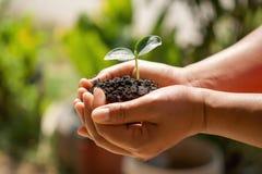 mano che tiene piccolo albero per la piantatura nel giardino eco fotografie stock libere da diritti