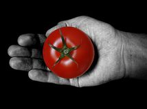 Mano che tiene pomodoro rosso Fotografia Stock Libera da Diritti